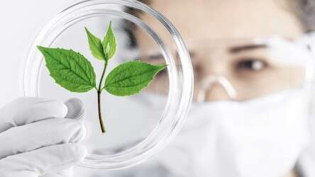 Laboratory assistant looks at plant leaf in Petri dish
