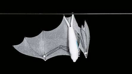Festo BionicFlyingFox: the artificial flying fox can control and fold up its wings individually